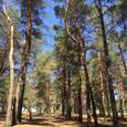 Уникальный участок в городе в сосновом лесу на берегу Днепра
