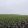 Продам 7 гектар земли в между Большой и Новой Долинами.
