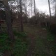 Продажа участка 0.25Га  с.Романков, застройка, лес  на участ
