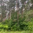 Продам 1,25 га, земли приват, лес, Орловщина!